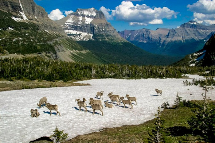 glacier-park